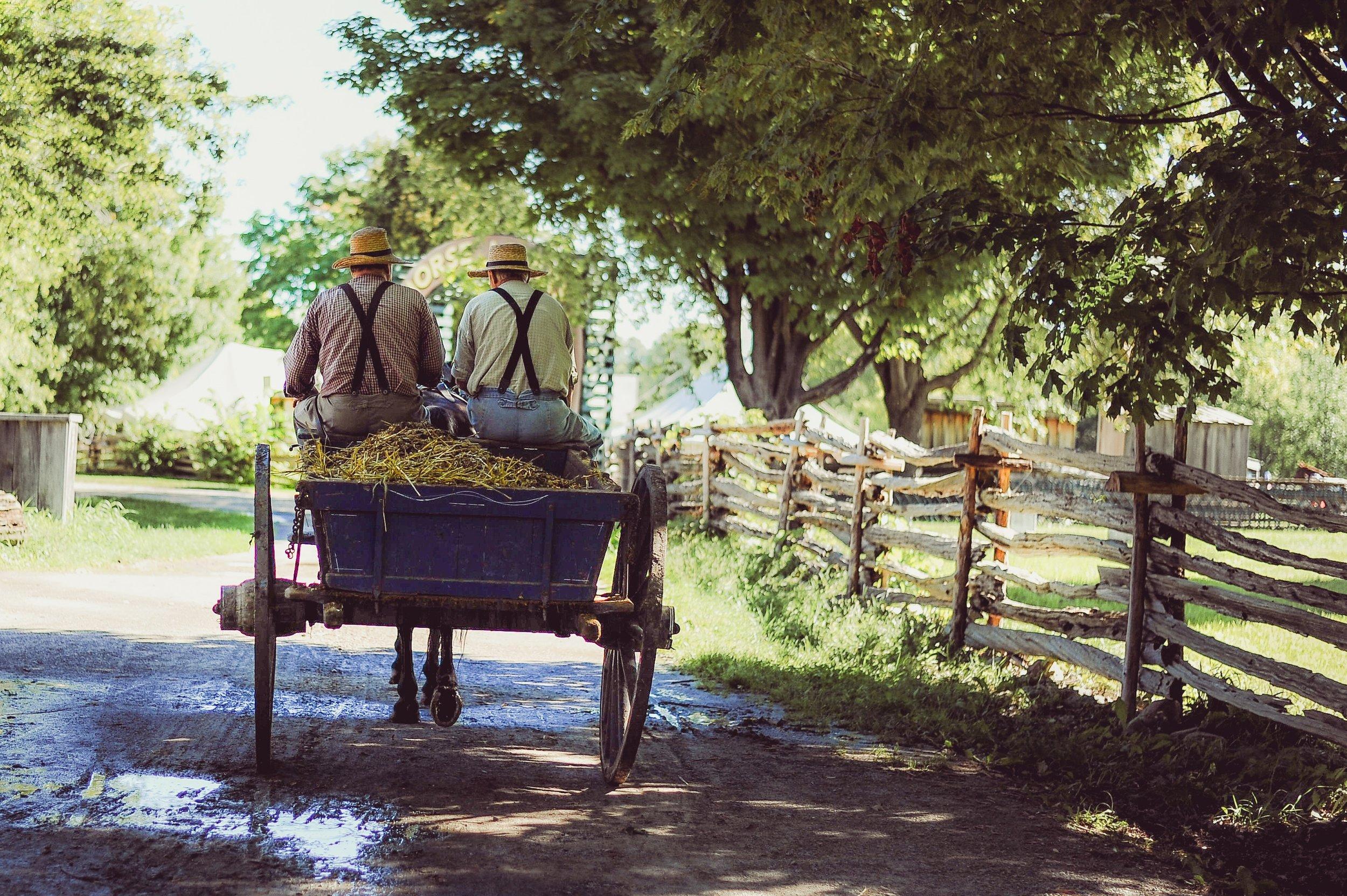 horse adn cart .jpg