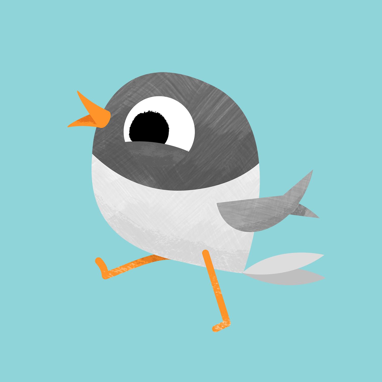 Nali the Arctic Tern