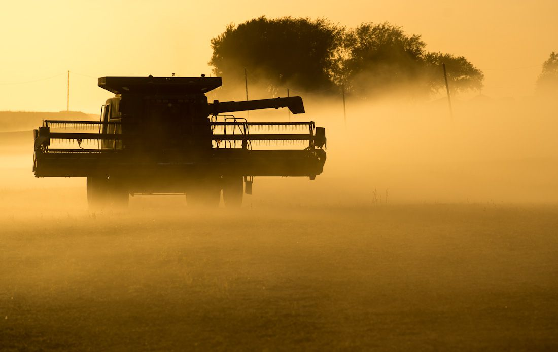 A combine turns while harvesting soybeans as dust from a nearby gravel road settles across the field.