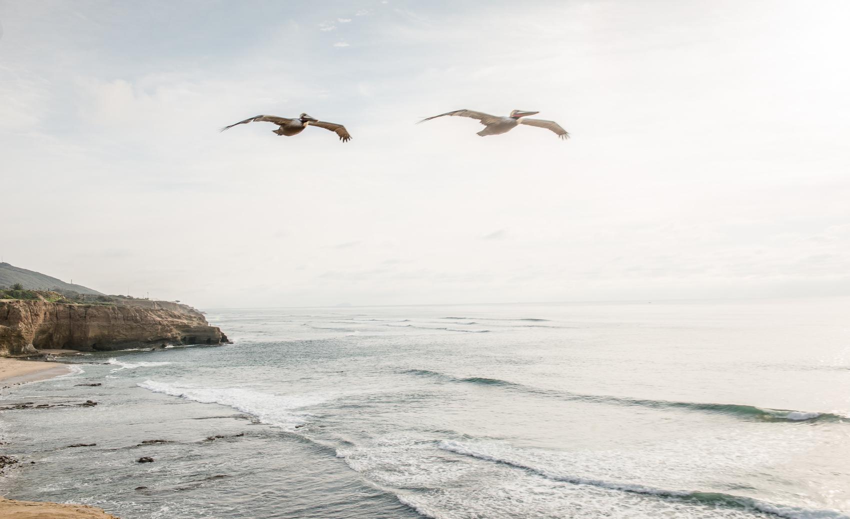 seagull-3506.jpg
