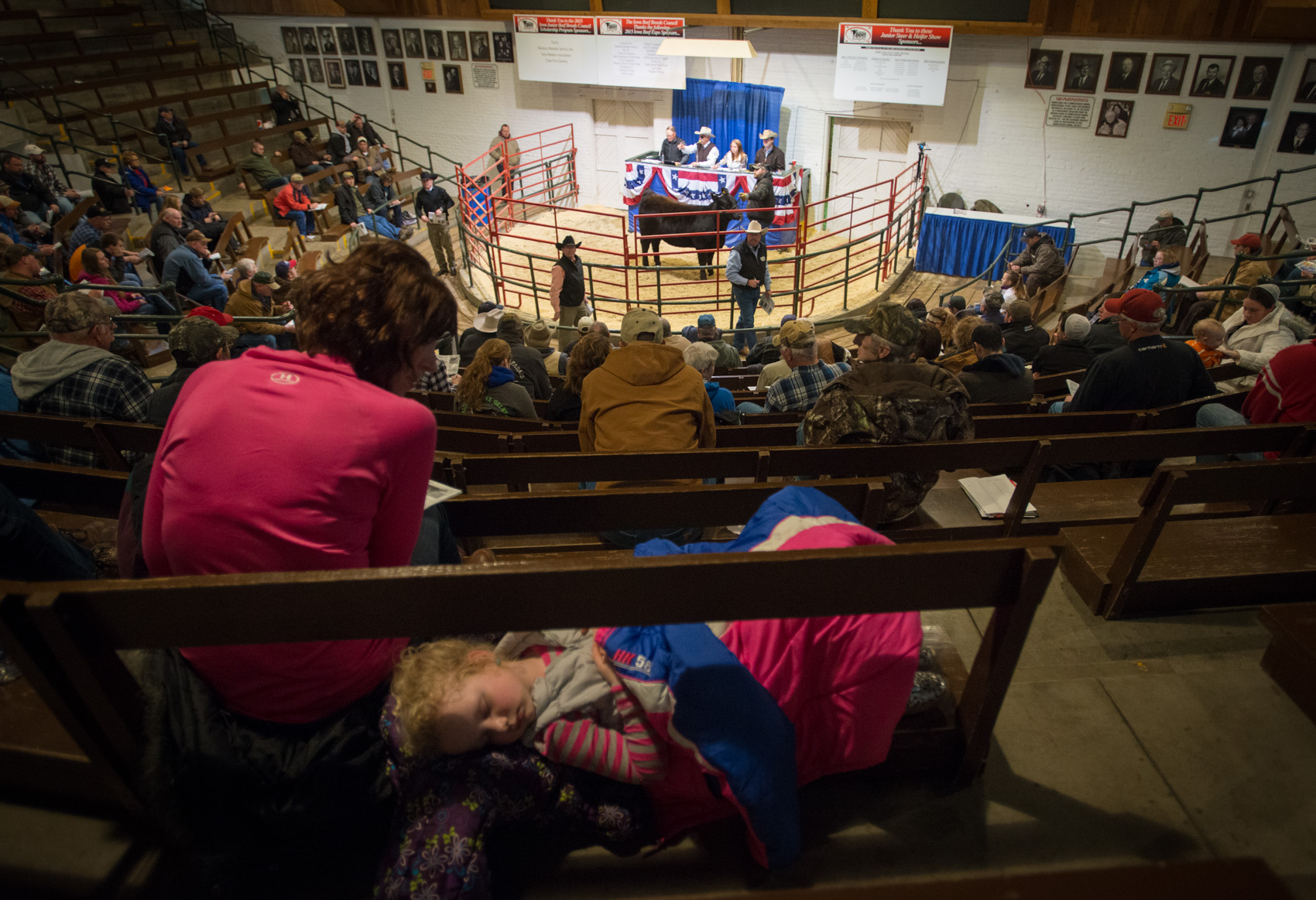 (Photo: Joseph L. Murphy) A girl takes a nap while an auctioneer calls out bids during the Iowa Beef Expo at the Iowa State Fairgrounds in Des Moines yesterday. The Iowa Beef Expo is running through Sunday of this week. (Photo: Joseph L. Murphy)