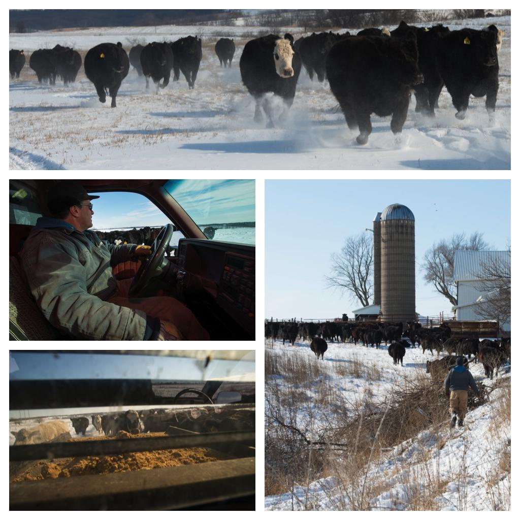 Kaldenberg-Cattle-Drive.png