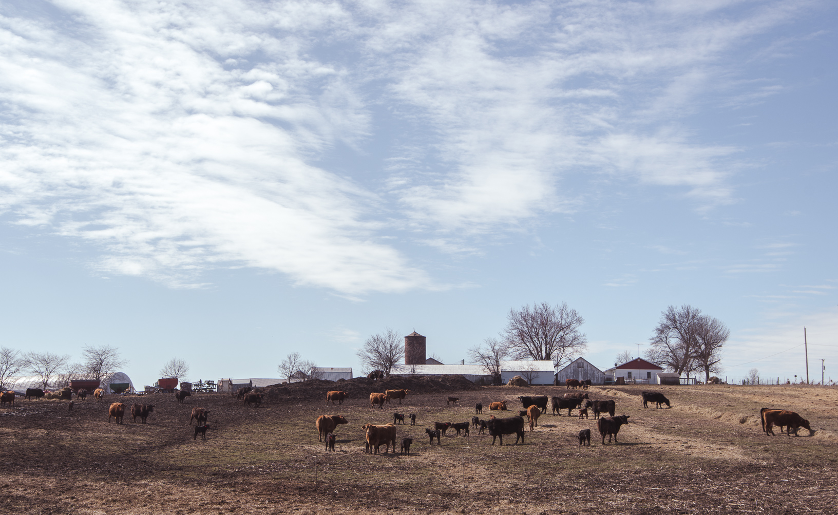 A pasture next to Reed's farm is speckled with cattle during calving season.