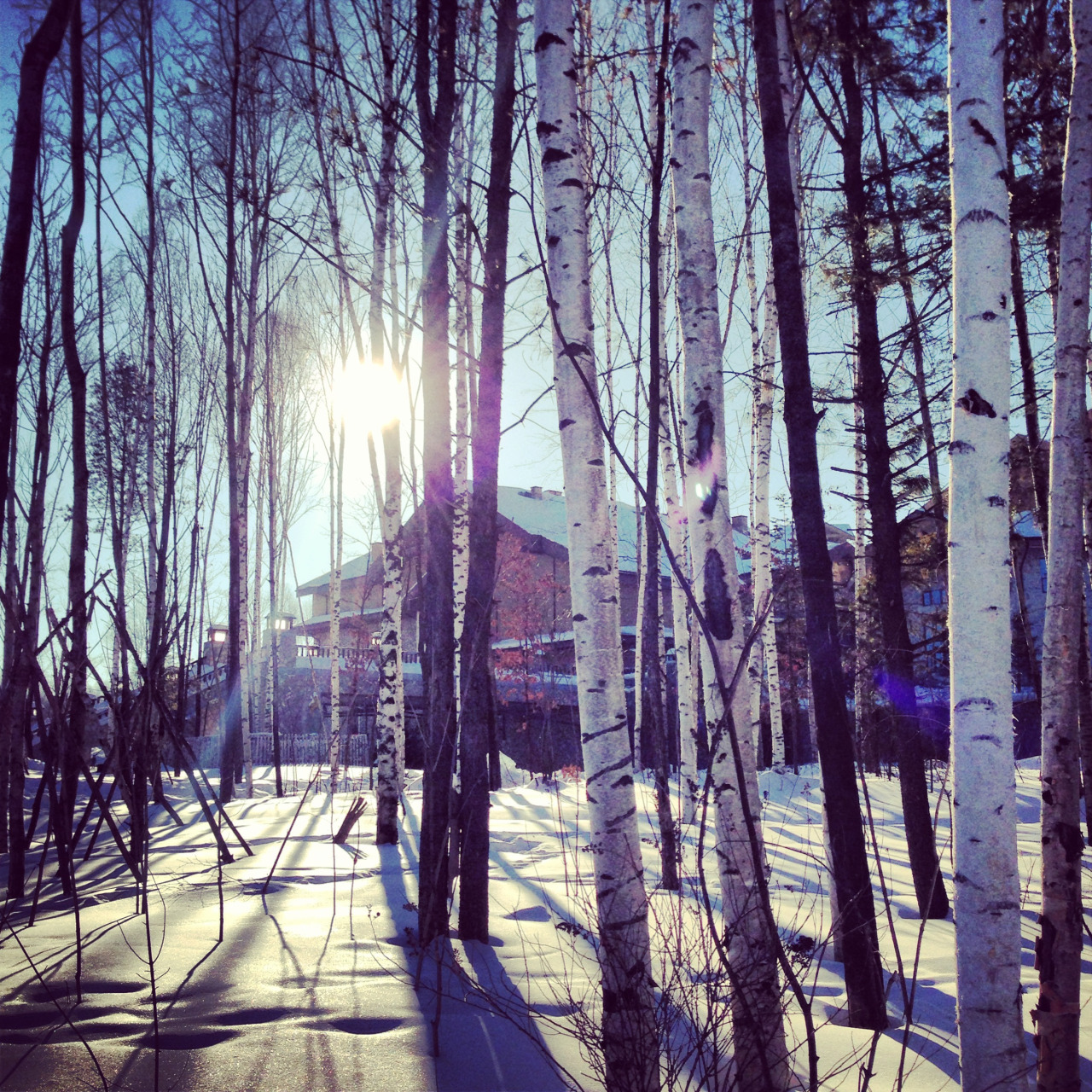Trees & sunshine