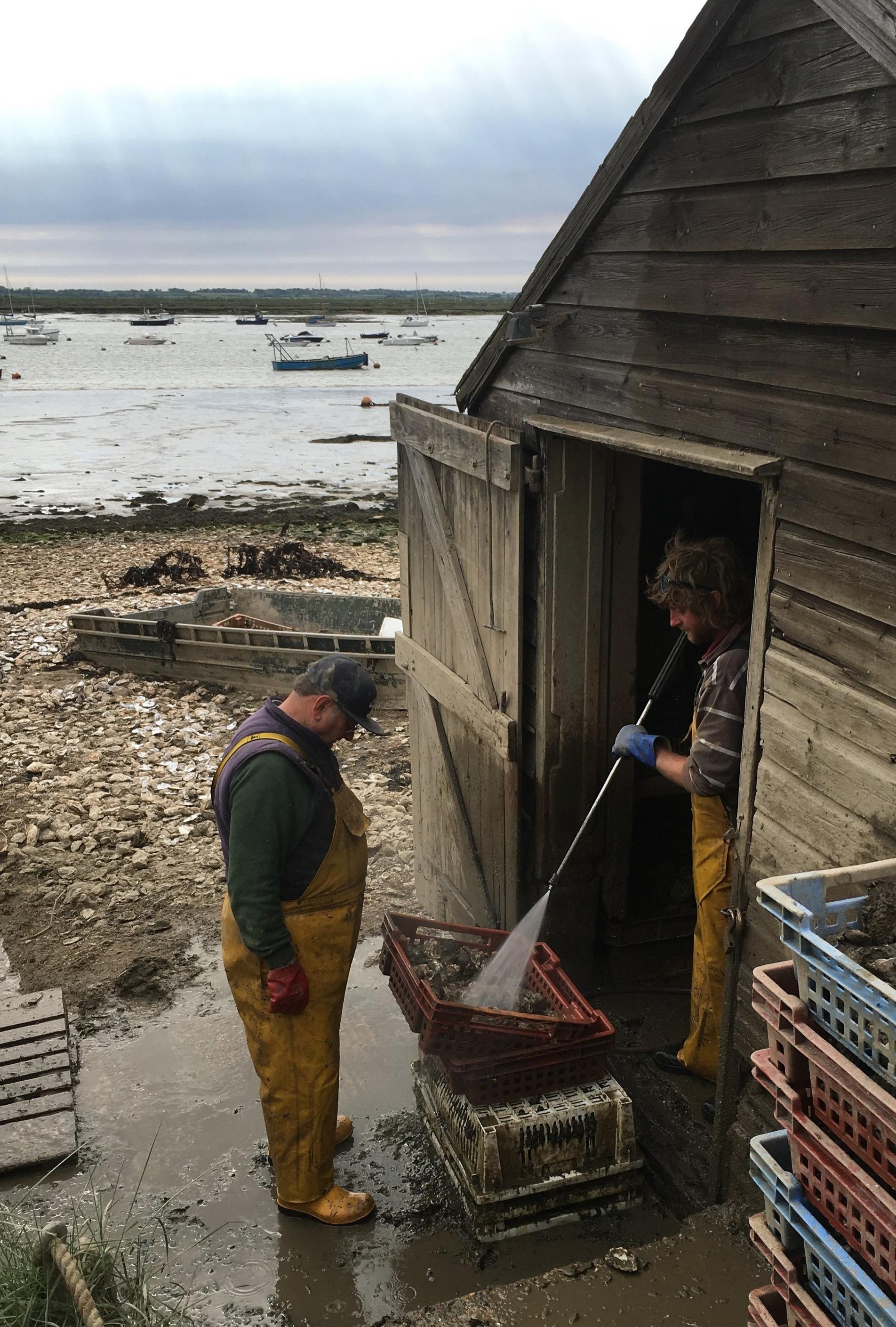 Oyster wash.jpg