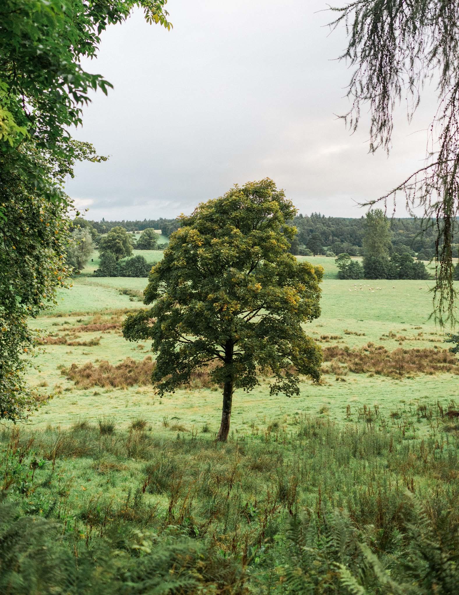 lucinderwill_ayrshire-1.jpg