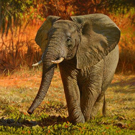 Playful elephant
