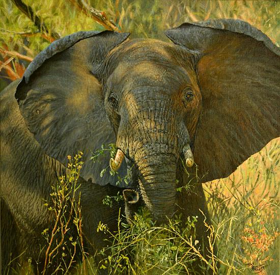 Elephant at my camp