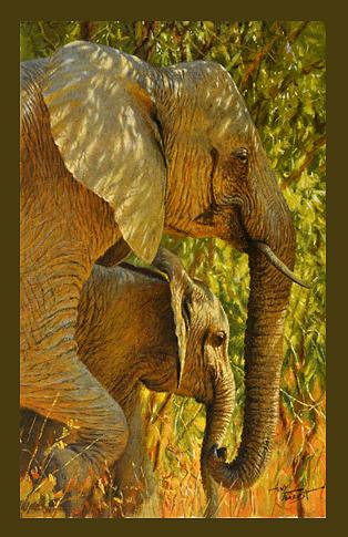 Elephants, Lower Zambezi