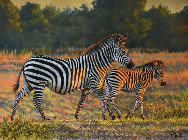 Crayshaw's Zebra