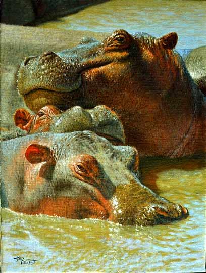 Hippo in the Mara