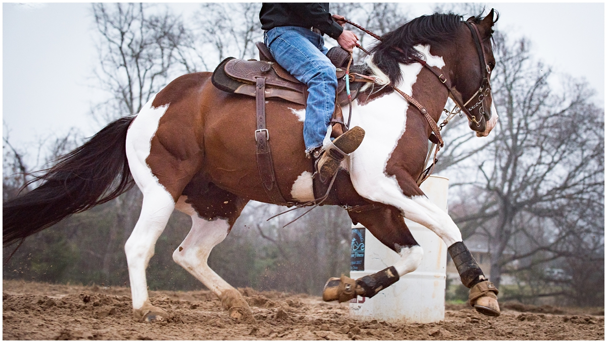 Paint Horse Barrel Racing Stallion Photography Session in Tyler Texas by Rachel Florman