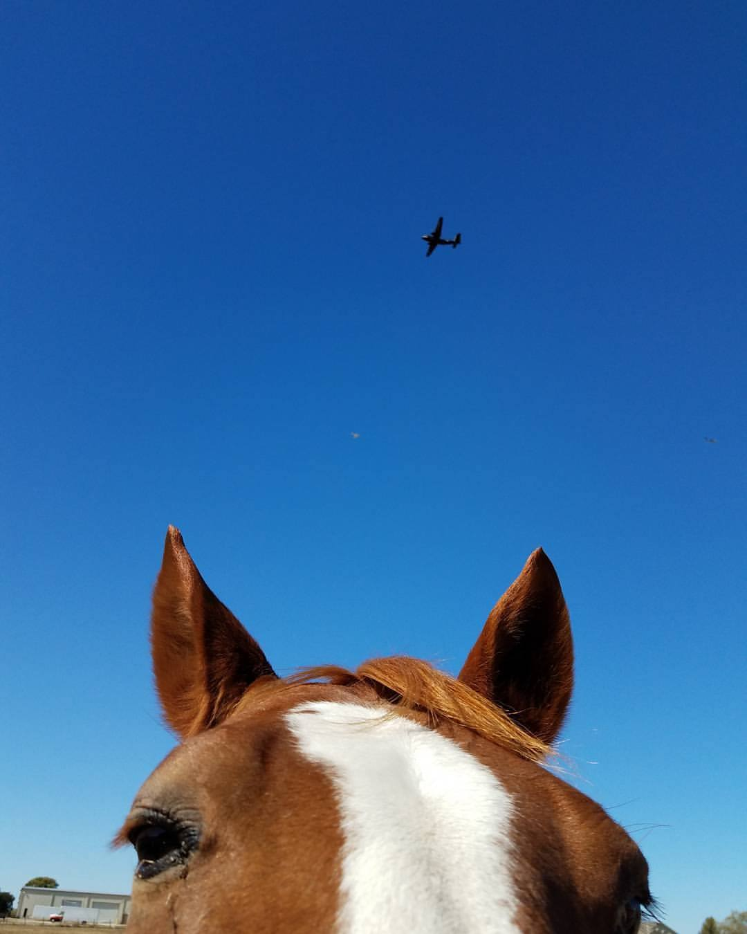Herbie's thoughts on the annual air show