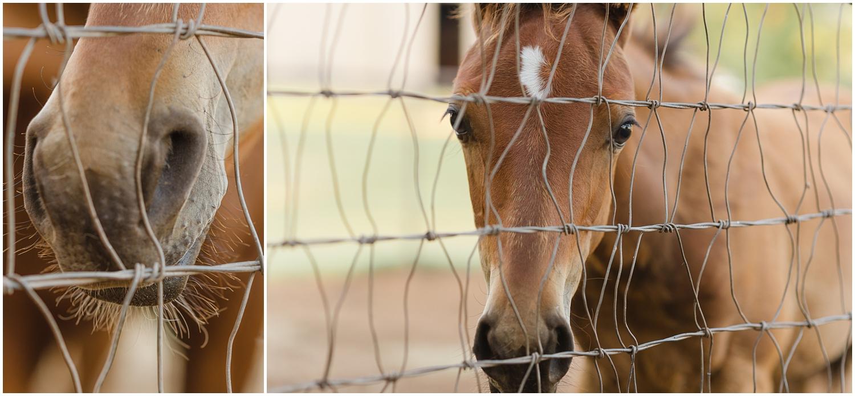 curious foal by Oklahoma Horse Photographer Rachel Griffin Photographer