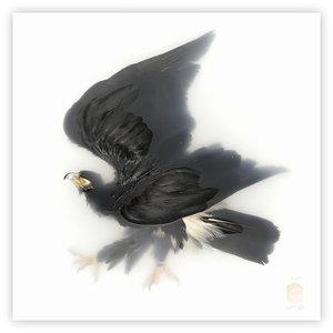 DSvT-Unknown+Pose+by-Black-Eagle.jpg