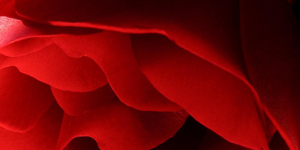 Red02.jpg