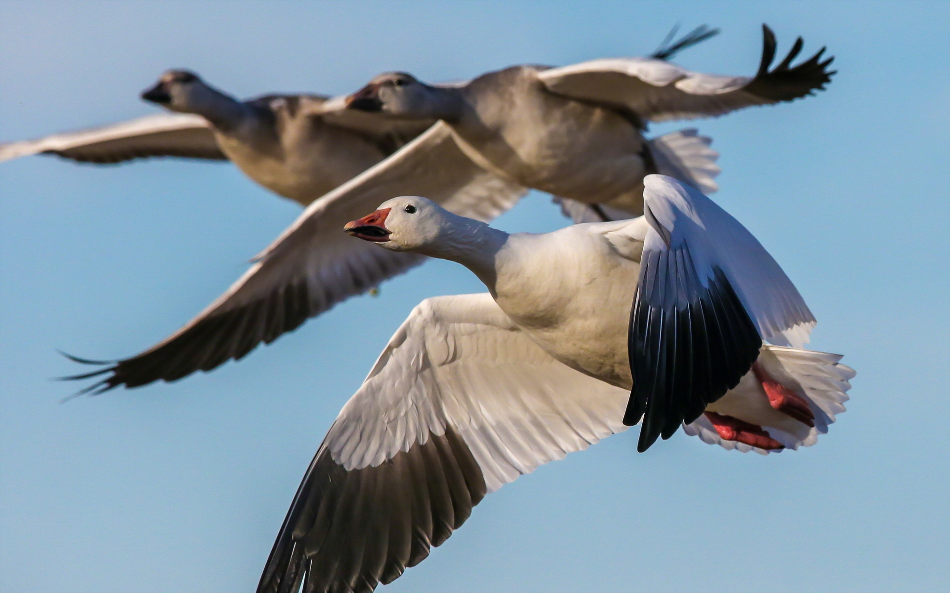 Center for Performance Improvement - Lessons from the Geese