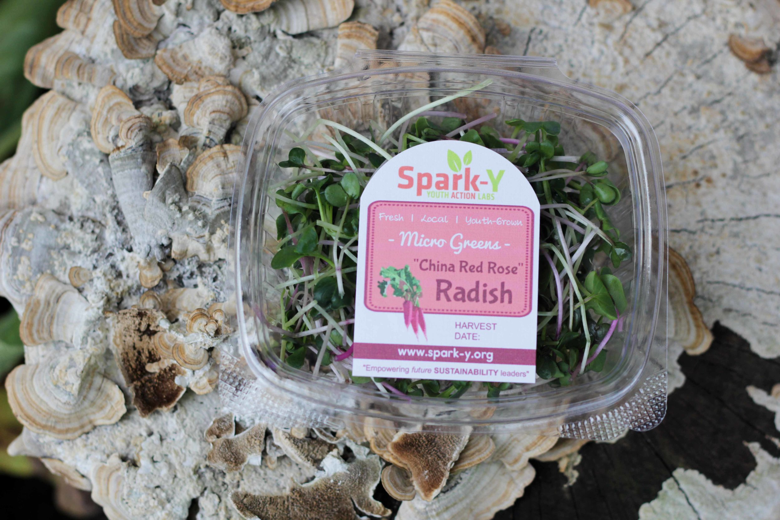 Spark-Y Microgreens -