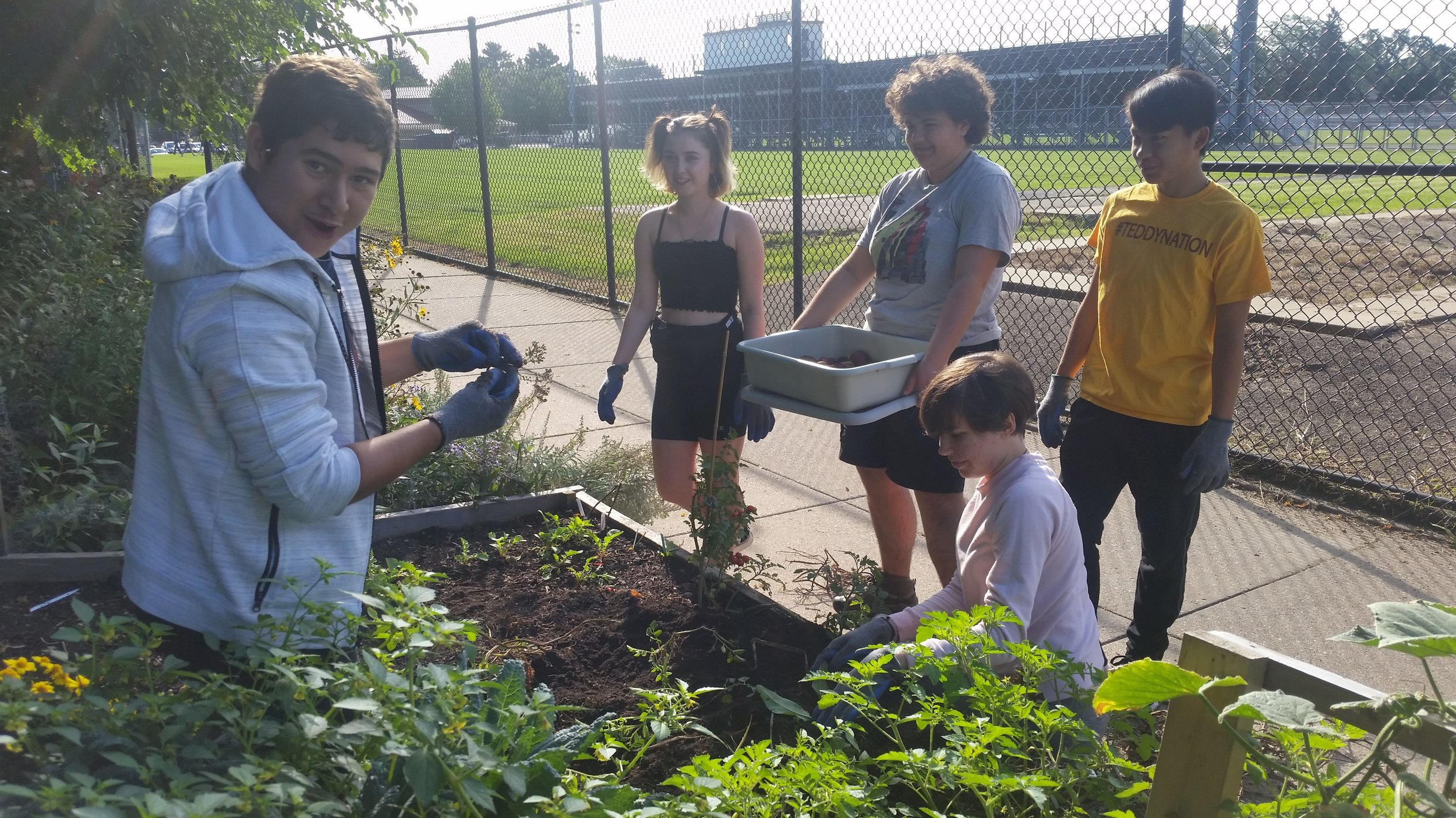 Roosevelt youth harvesting produce from their raised beds.