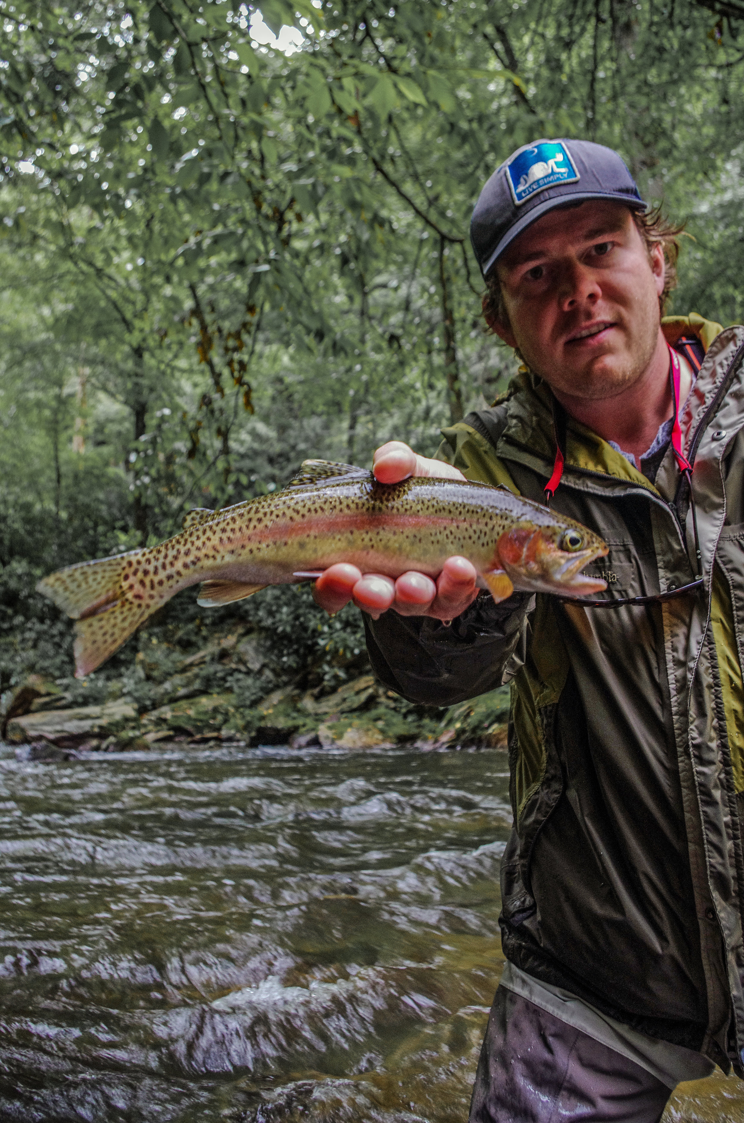 """An average Davidson River rainbow. Most of the fish in this water are between 10 and 14 inches and are wild fish. This is a challenging stretch of river and on an easy day will test an angler to the limit of their skills. On a tough day if you can get away with a fish to the net then you have done better than most everyone else on the water. This is the kind of water that makes you a better fly fishermen. A common saying around here is """"if you can catch 'em on the Davidson, you can can catch 'em anywhere."""""""