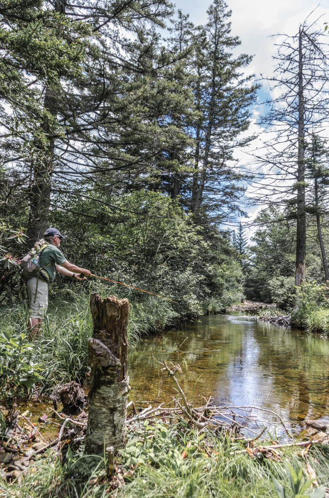 Backcountry Brook Trout