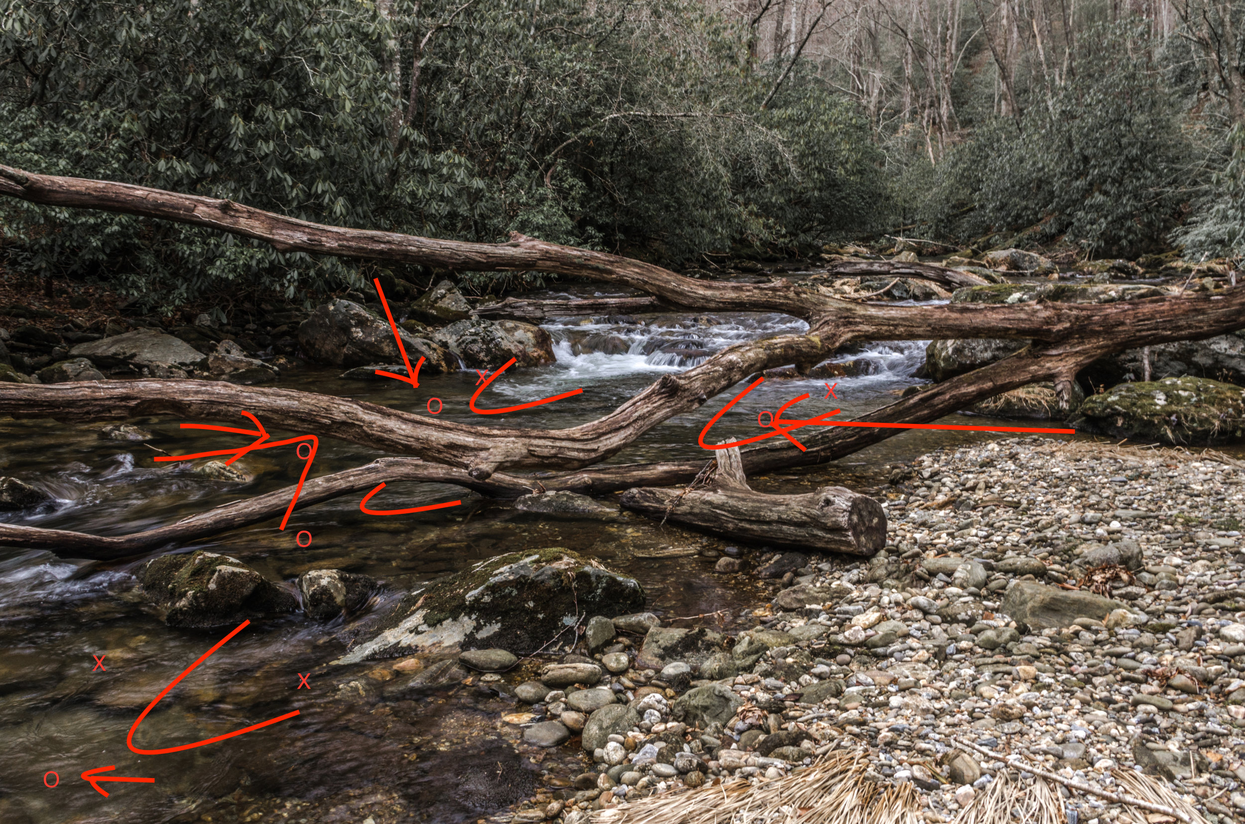 Diagram of Fish Holding on Small Creek, Pisgah National Forest, North Carolina