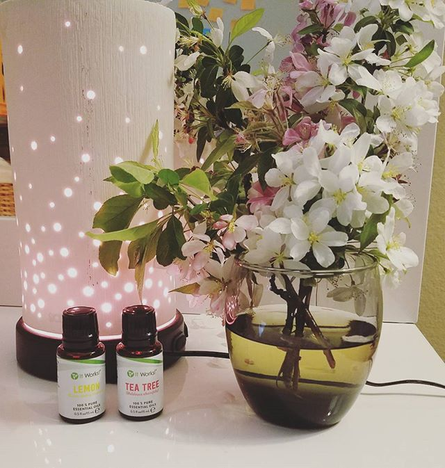 Broke out the oils since the bedroom smells too much like 🐶  Anyone else struggle with this!? 🤔  2 drops of lemon oil & 1 drop of tea tree 😘 totally took the smell away, it's completely natural, way better for the environment & super affordable!  I'm opening three spots through the end of the month to join my oil of the month club, you pick which oil you want to start with, you'll get exclusive freebies from me like downloadable oil use worksheets & it starts as low as $17 a month! 😍😍😍 comment if you want in!!! #essentialoils #springtime #gorgeousflowers #flowers #sopretty #Lovethisstuff #dogmom #perfection #lemon #teatree #oils #oilofthemonthclub #monthlyclubs #diyoils #diyhome #home🏡