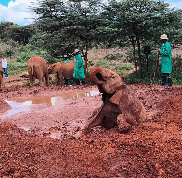 Who's down for a friendly mud fight with this playful looking elephant 😍🐘🐘🐘 // #worthmorealive #elephant #mudfight #walking #ivoryfree #elephants #pleasedontrideelephants #elephantsanctuary #nature // 📸: @ajaffs 🌍🌿
