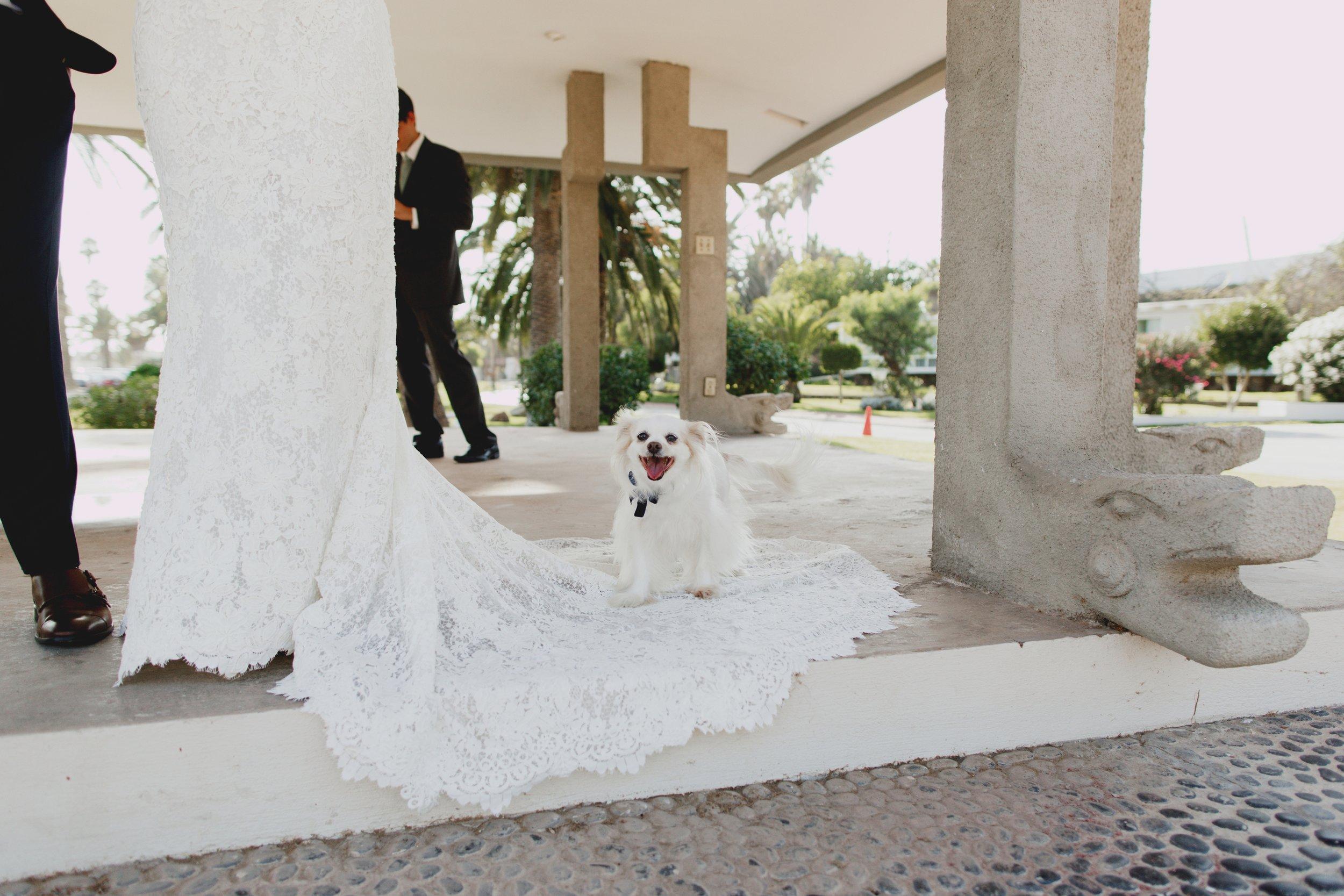 amandavanvels_ensenada_mexico_wedding_067.jpg