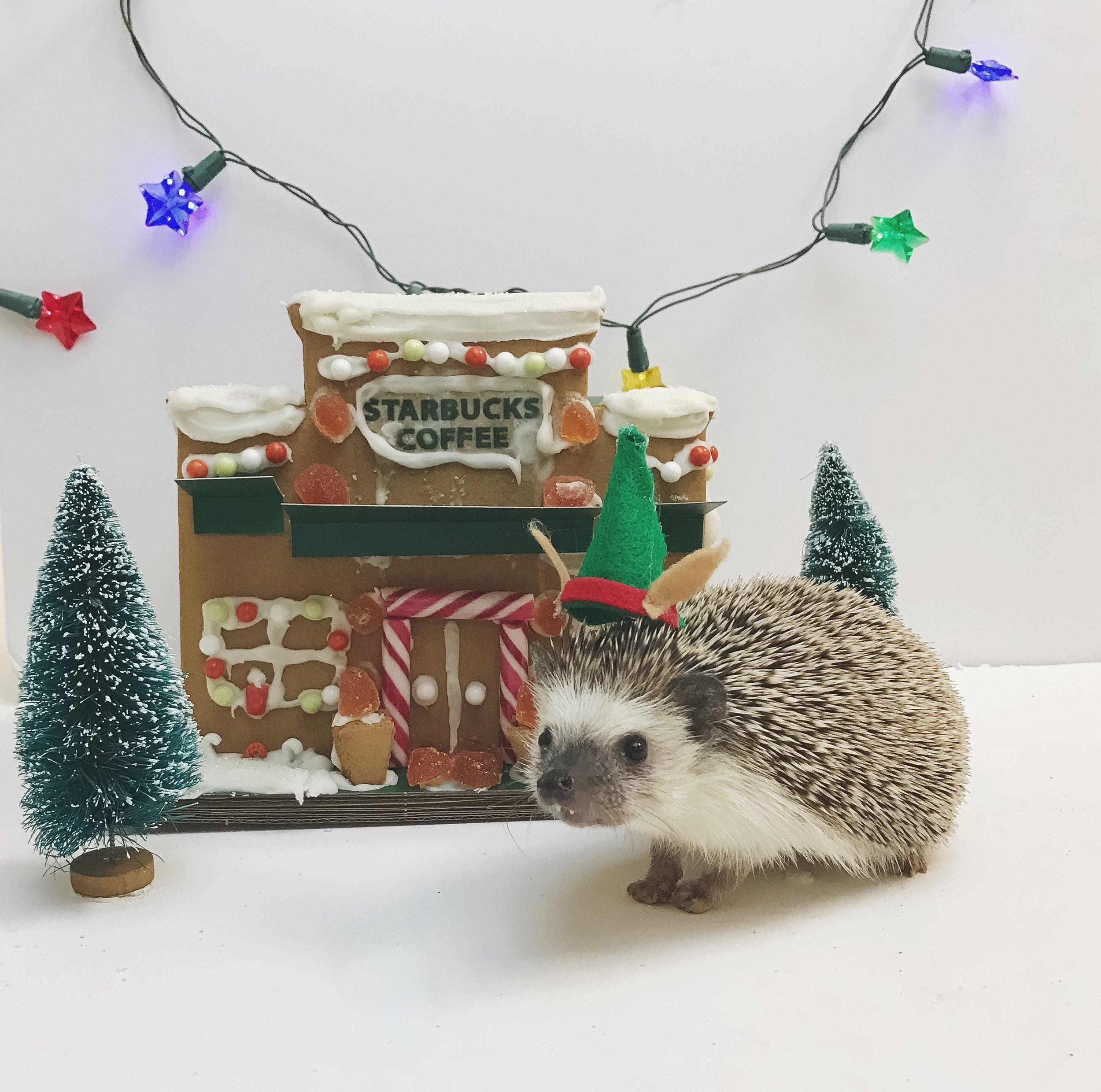 IMG_3938 hedgehog.jpg