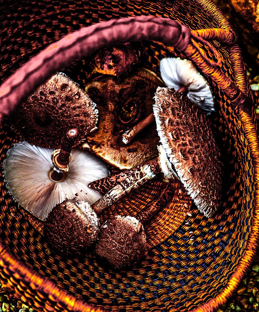 Coulemelles_parasol_basket_crop_9978.jpg