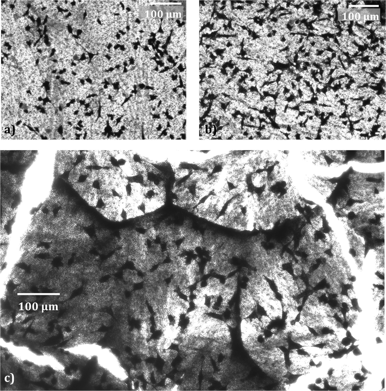 Figure 4: Fibrosarcoma cells on a) an empty template b) a template filled with PLLA nanowires andd c) PLLA nanowires after the template has been removed