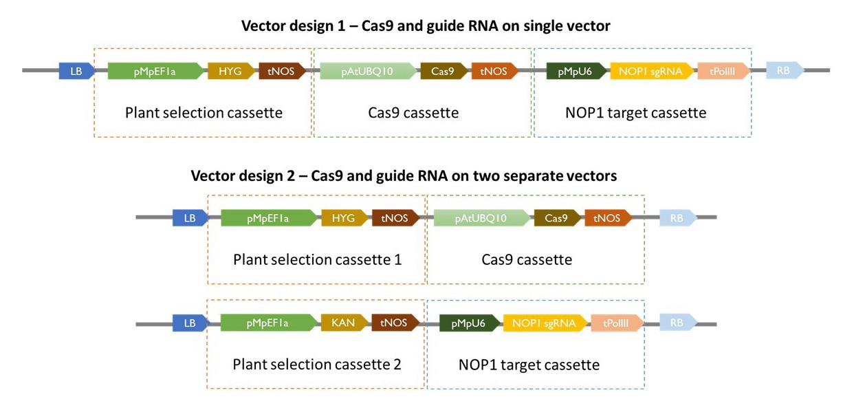 Figure 2. Vector design for generating CRISPR knockouts