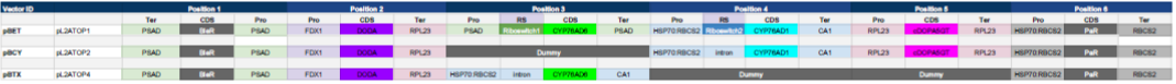 Table 2.  Detailed level 2 design for each of the constructed vectors. pBET is the vector containing riboswitches for CYP76AD1 and CYP76AD6. pBCY and pBTX are vectors designed to produce betacyanins (red) and betaxanthins (yellow) respectively.