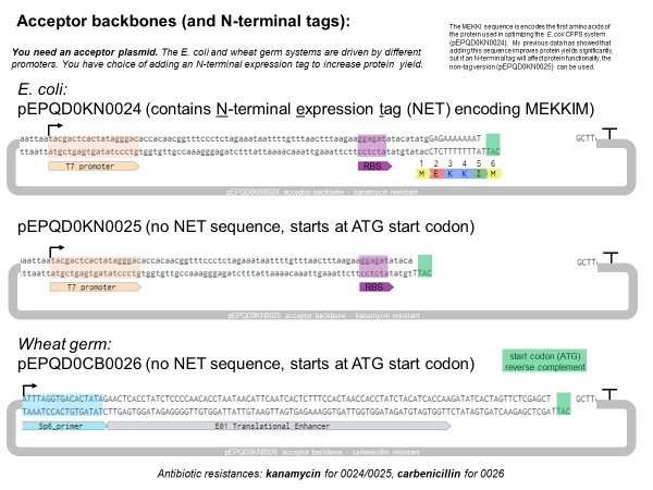 Figure 1.  Representation of plasmids generated for this project
