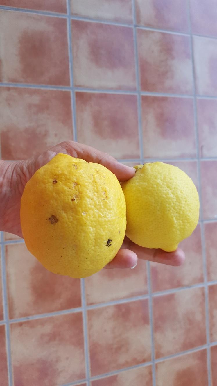 Snacka om fina citroner!
