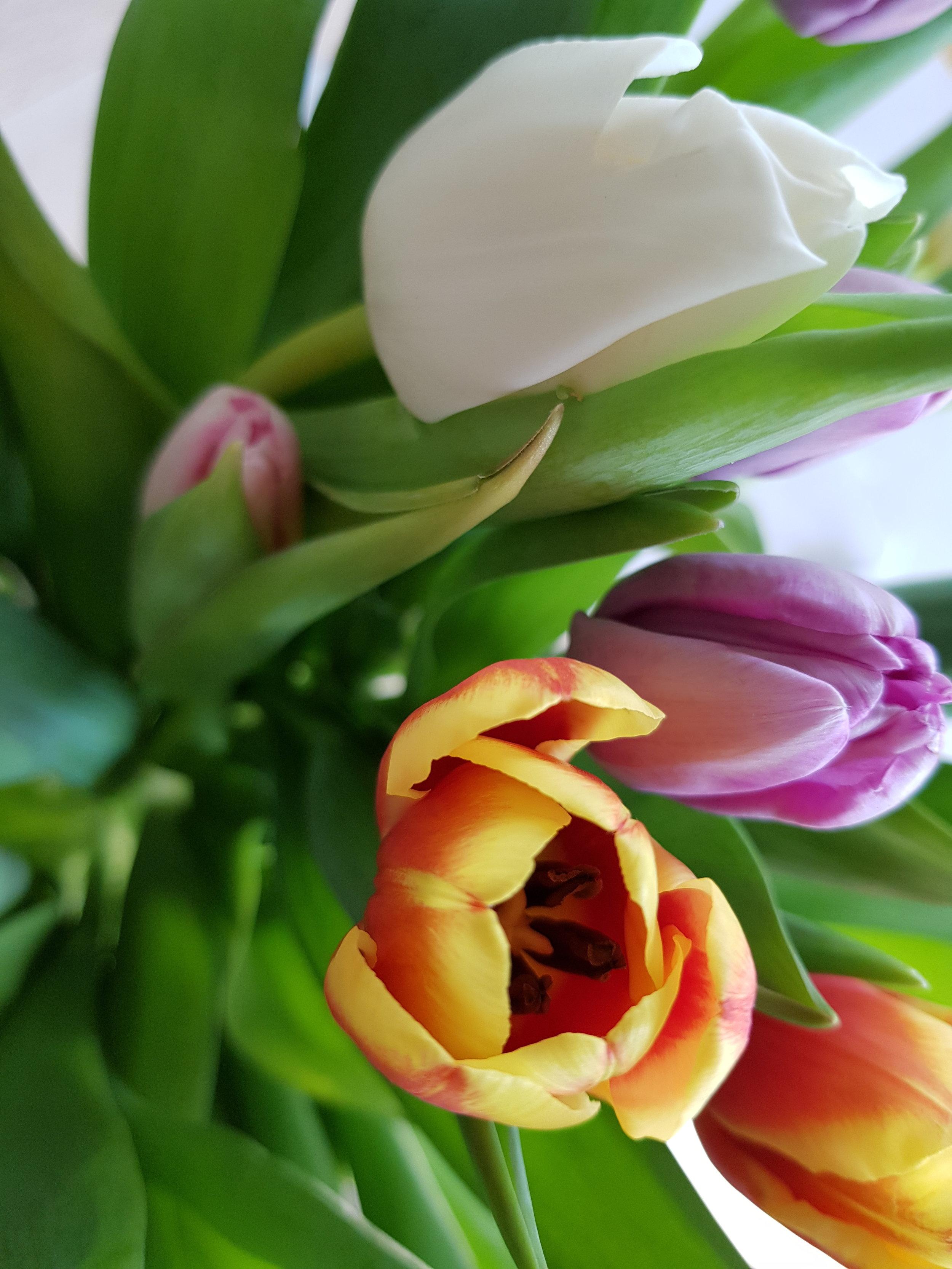 Älskar tulpaner! Älskar vår! Älskar färg!