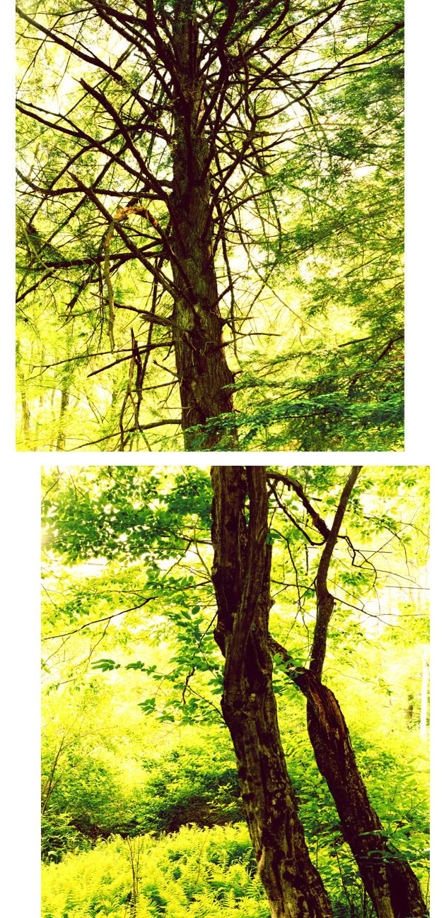 Two Tress (Diptych), 2007