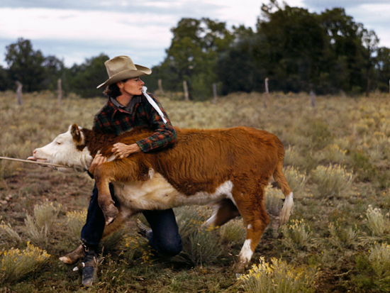 Ruth Leonard secures a calf in her pasture.