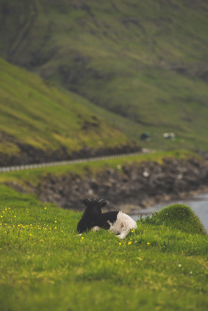 FaroeIslands_Day4_25-6-17_TAL-24.jpg
