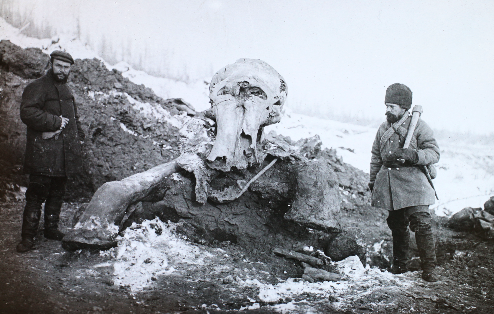 """Is a """"mammoth"""" greenhouse gas release from melting permafrost imminent?  (  sourced from    Wikimedia Commons   )"""