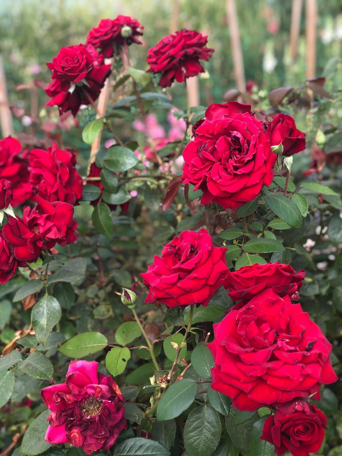 LUSH Flowers Liverpool - BRIGHT Zine -7.jpeg