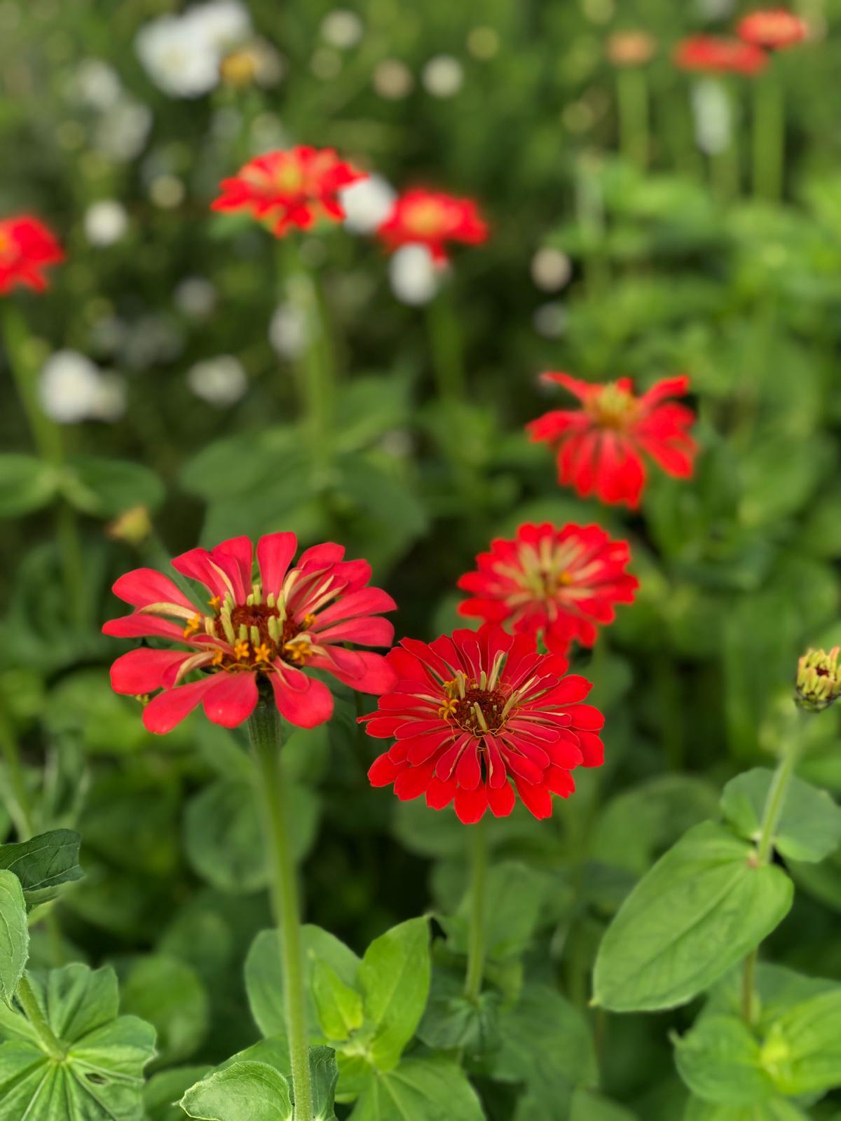 LUSH Flowers Liverpool - BRIGHT Zine -9.jpeg