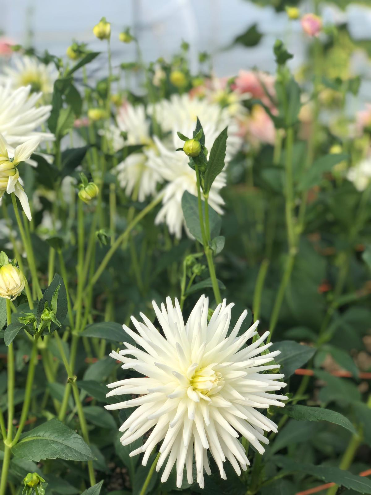 LUSH Flowers Liverpool - BRIGHT Zine -12.jpeg