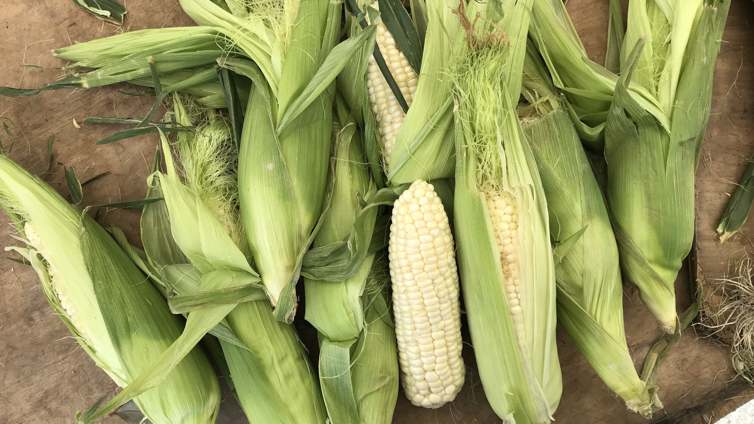 June Sweet Corn