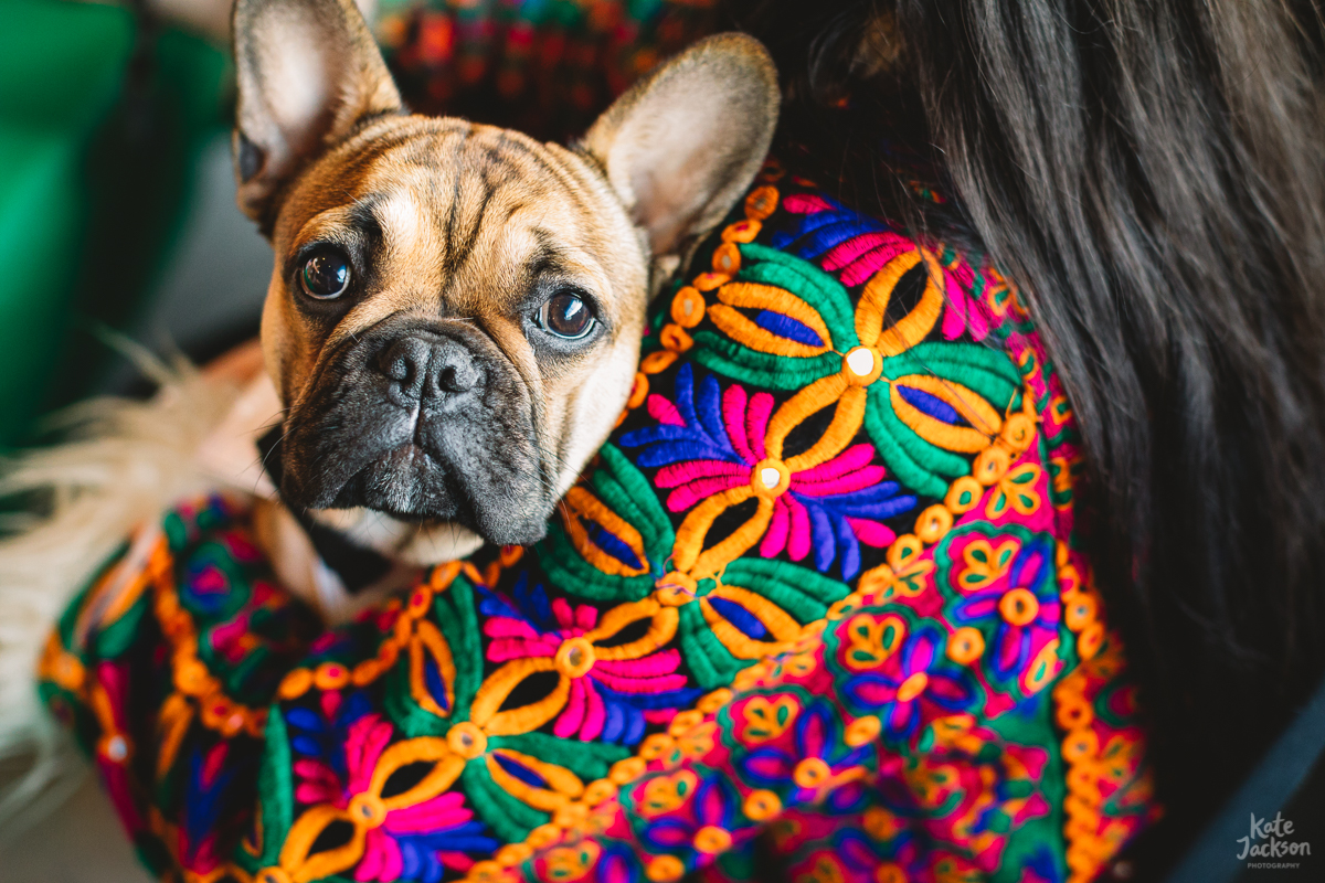 Dogs at Weddings - DIY Festival Wedding at Knockengorroch in Scotland | Kate Jackson Photography