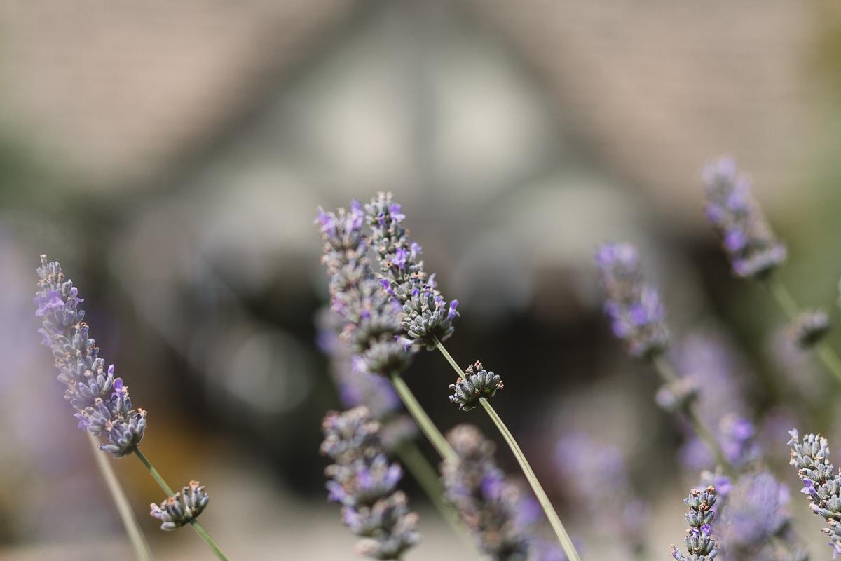 Lavender details at Hyde Barn Wedding Venue