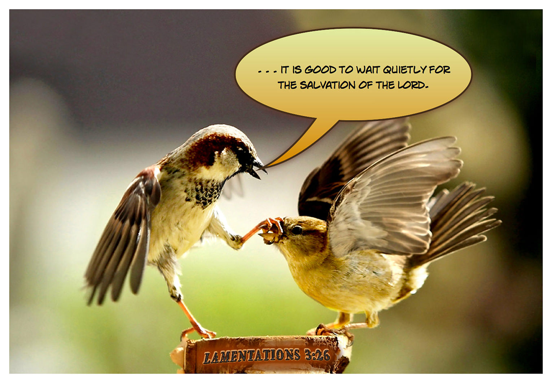 lamentations.3.26.scripturePhoto_jumbo.jpg