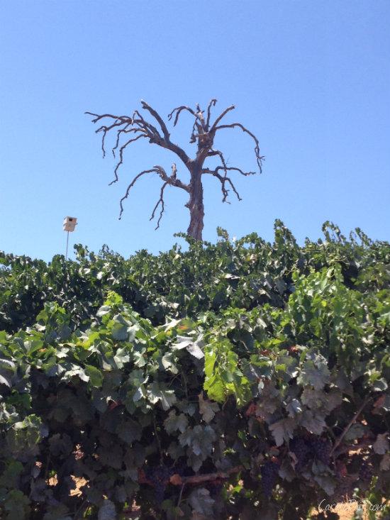Terra d'Oro Winery Amador County | CaretoPair.com