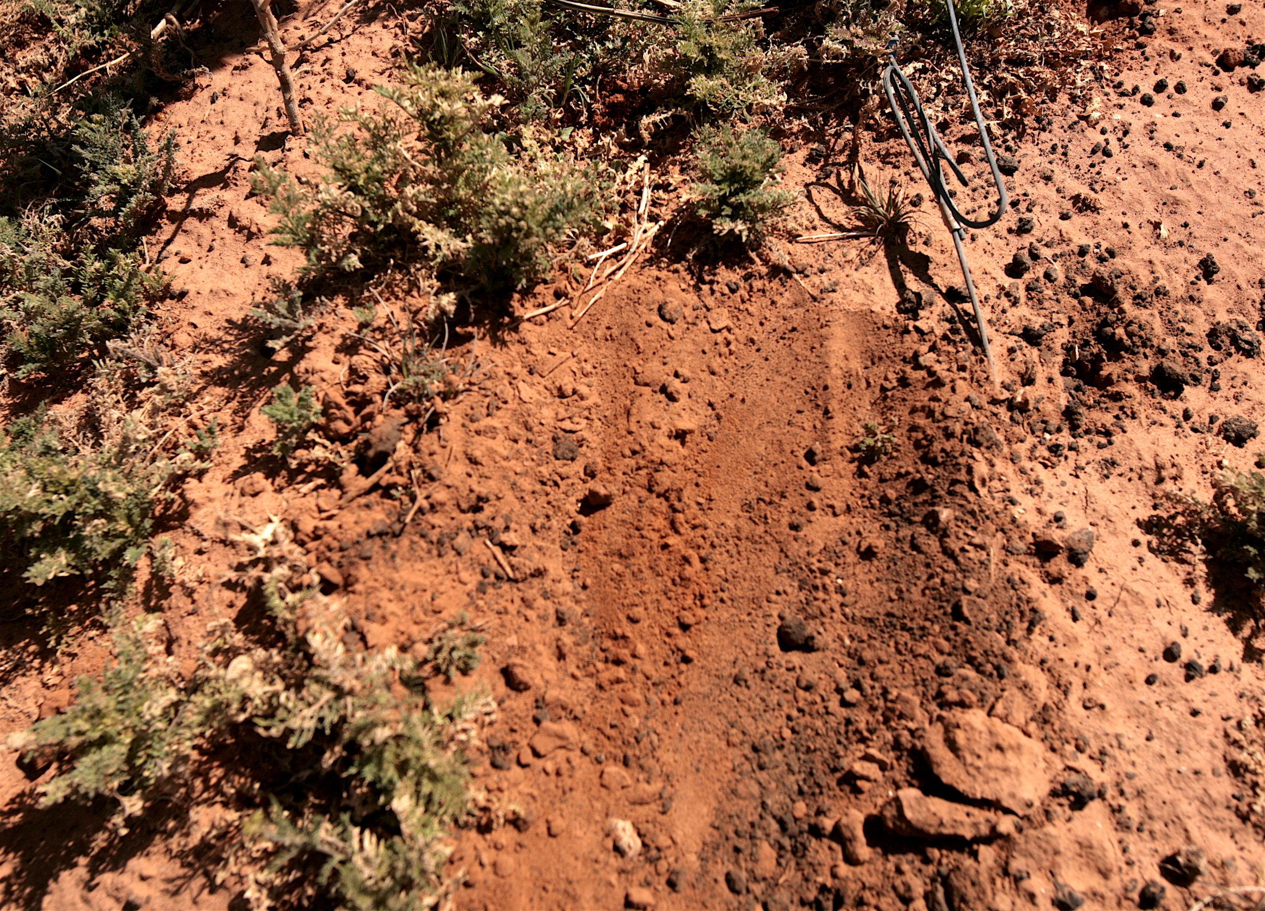 More Paka Dirt.jpg